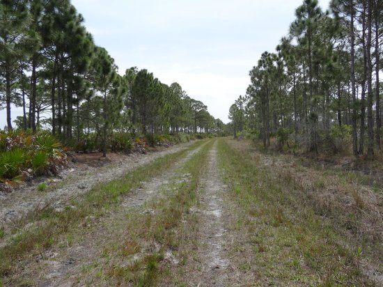 Myakka State Forest Englewood 2020 All You Need To