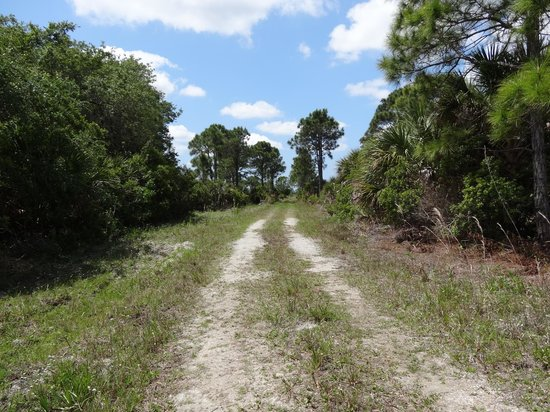Myakka State Forest: South Loop