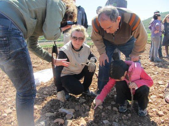Riojatrek: Ayudando en el viñedo.