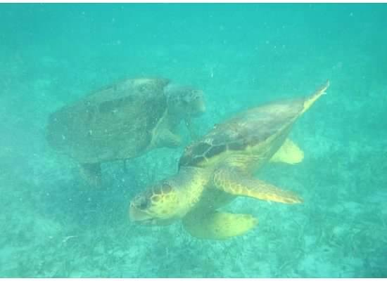 Hatchet Caye Resort: Snorkeling excursion