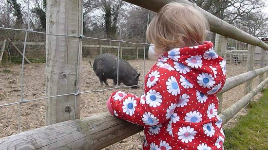 The Hope Nature Centre: Noisy pigs