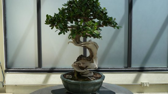 U.S. National Arboretum: Bonsai exhibit