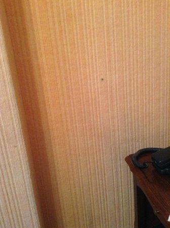 Hotel de l'Esplanade : Cigarette burn on wall