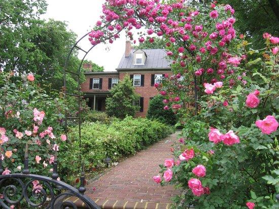 The Jackson Rose B & B: Full bloom