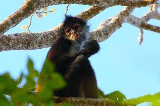 Viceroy Riviera Maya: Monkey!