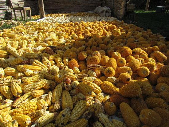 El Albergue Ollantaytambo: Farm viewing.