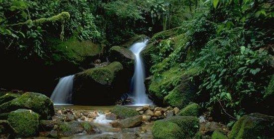 Atlantic Rainforest Mata Atlantica Brazil South America Top Tips Before You Go Tripadvisor