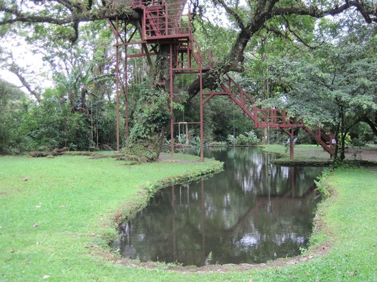 Canopy Lodge Natural pool and tree house! & Foto de Canopy Lodge El Valle de Anton: Natural pool and tree ...