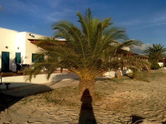 Vel Mari: palm tree