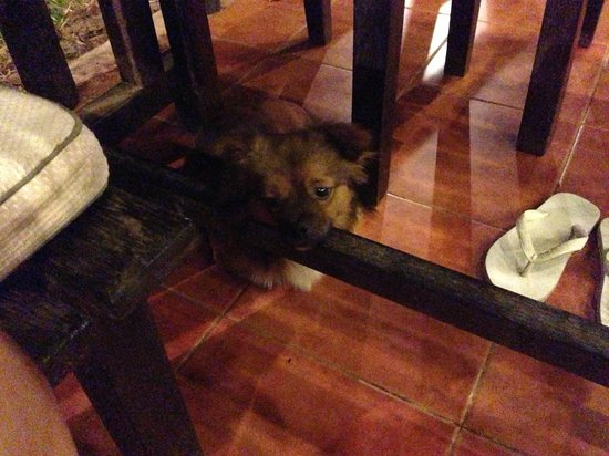 Palm Village Resort & Spa: the doggie in the hotel walks around freely