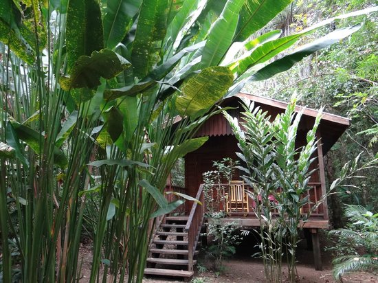 Macaw Bank Jungle Lodge: Orchid cabin exterior and jungle vegetation
