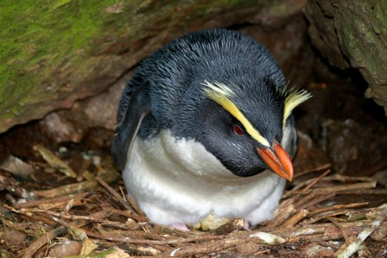 Lake Moeraki, New Zealand: Viewing tawaki penguins is just one of the special attractions of a stay at the Wilderness Lodge