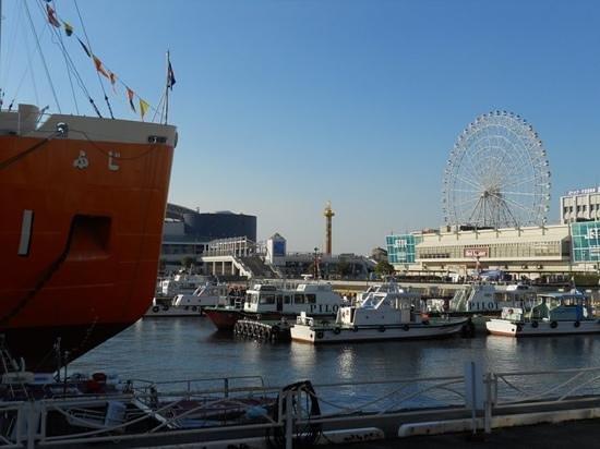 優雅に泳ぐウミガメ君です@ウミガメ水槽 - Picture of Port of Nagoya Public Aquarium, Nagoya - Tri...