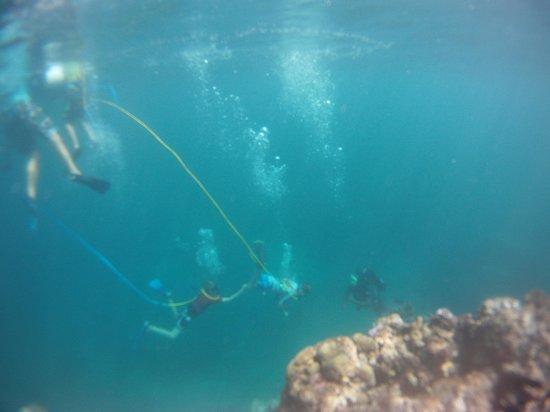 Snuba -Vanuatu: Little Fish