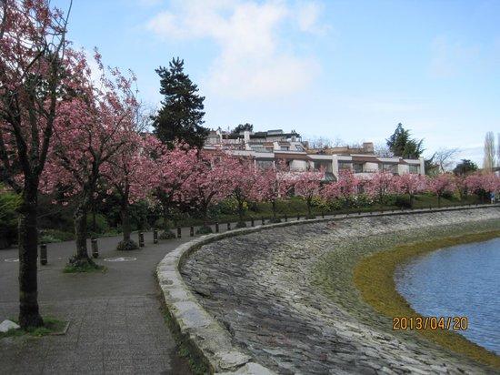 False Creek : 八重桜の並木道