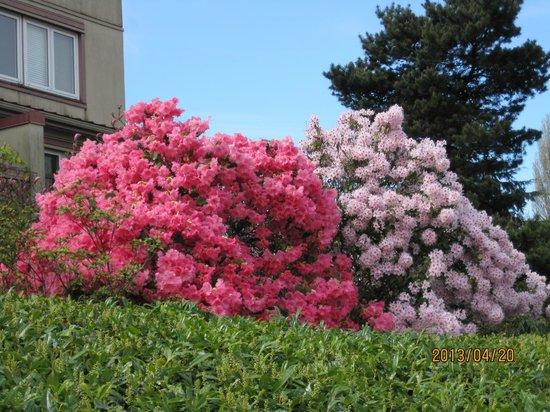 False Creek: シャクナゲが咲き誇っていました