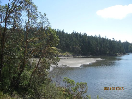 Arbutus Cove Guesthouse: View from the deck