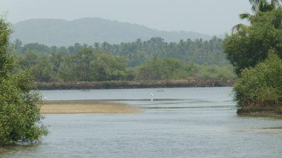 Mymos Goa: Sal River