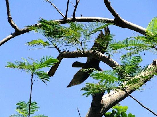 Geejam: Bird of Prey from Drum&Bass Verandah