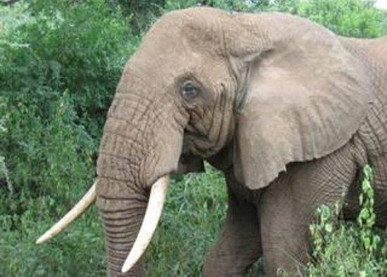 Malawi afbeelding