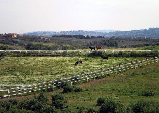 Dakota Ranch: Panorama