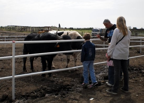 Dakota Ranch: Bufali, Tori, Cavalli e non solo....