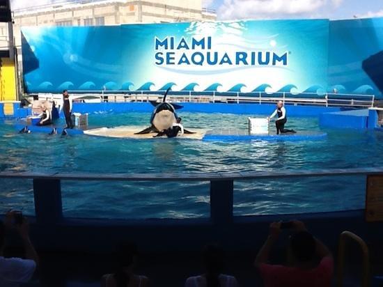 Miami Seaquarium: La finale du spectacle de l'orque