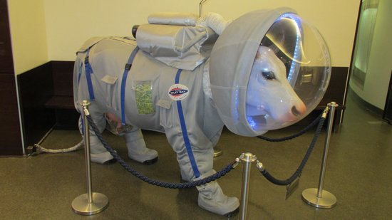 Planetarium Hamburg: Al planetario? clarooo,  es divertido!!!
