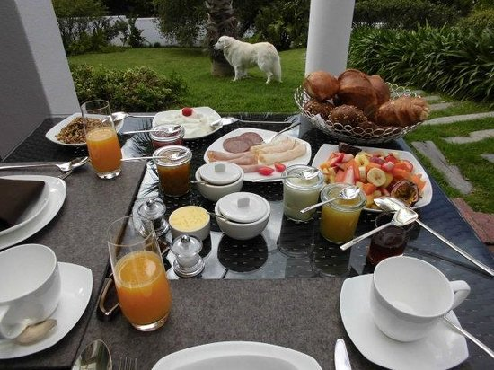 CUBE Guest House: Breakfast on the terrace and Paul the lovely dog