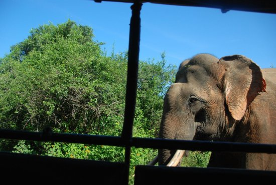 Chariot Guest House: Yala safari