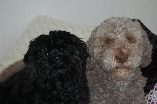 Crafoord Place: Our Mascots: Salsa and Fuji