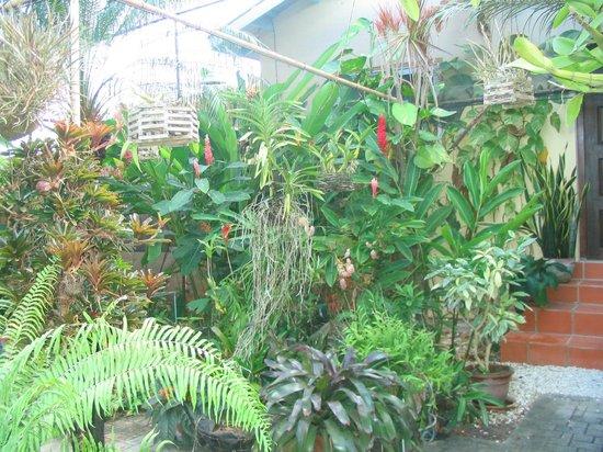 Hidden Eden Aruba: Walkway to our room
