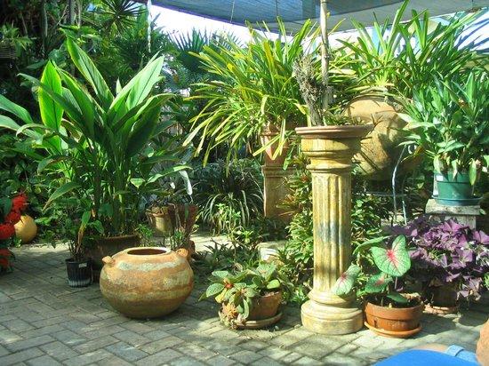 Hidden Eden Aruba: Another view of the garden outside our room