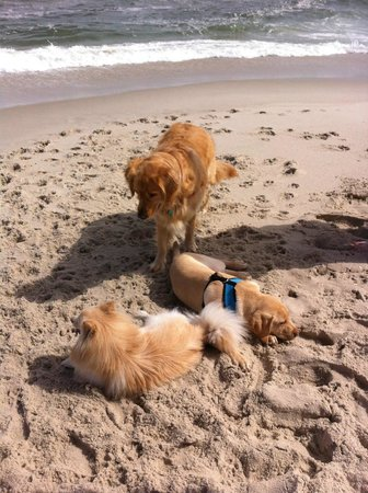 Engleside Inn: Enjoying playing on the beach