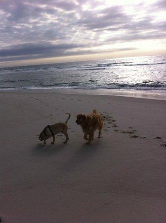 Engleside Inn: Loving the beach!