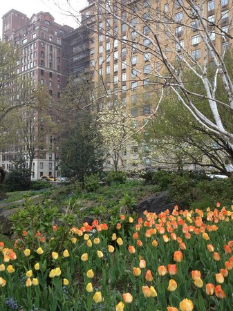 Central Park Sunset Tours: Central Park in April