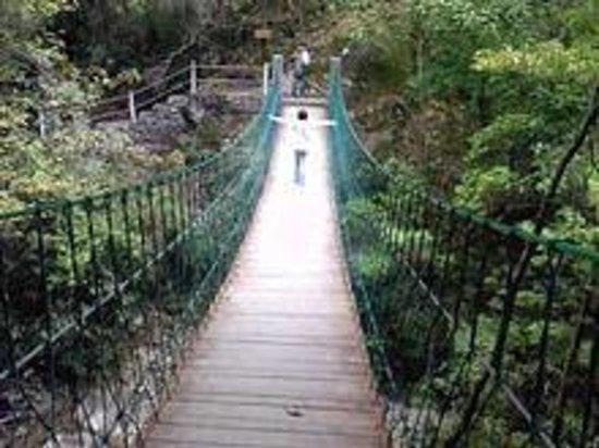 Foto de Jinzifeng Forest Park
