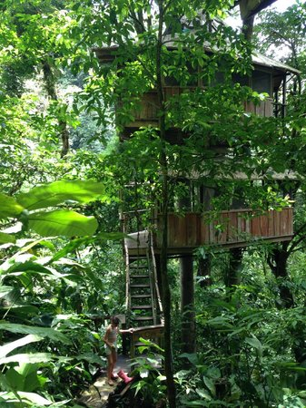 Finca Bellavista: Our Tree House