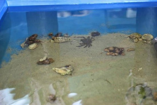 touch tank - Picture of 4-H Tidelands Nature Center, Jekyll ... on jekyll island camping, jekyll island field trip, jekyll island history, jekyll island 4-h camp,