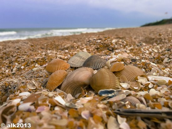 Vilano Beach, FL: blanket of shells