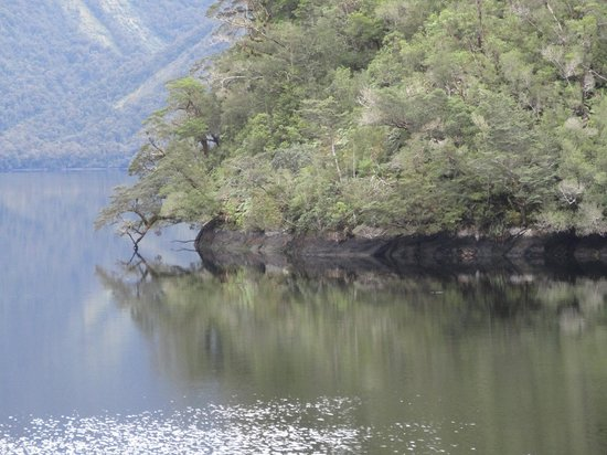 Rose n Reel: Doubtful sound is a beautiful Place to access from here