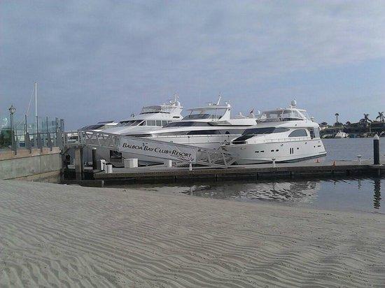 Balboa Bay Resort : Virgin Sand