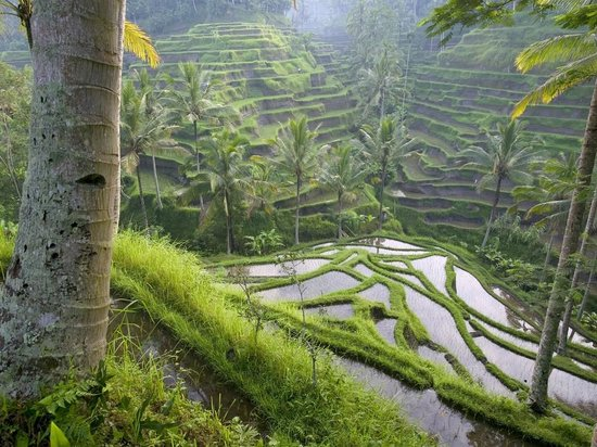 Bali Wayan Private Tour & Driver