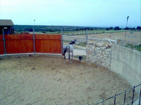 Casato Licitra: cavallo
