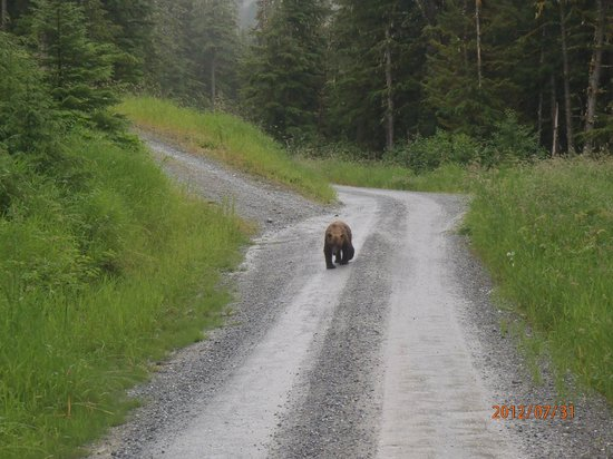 Chichagof Island: Brown bear spotted with Brown Bear Lodge tour