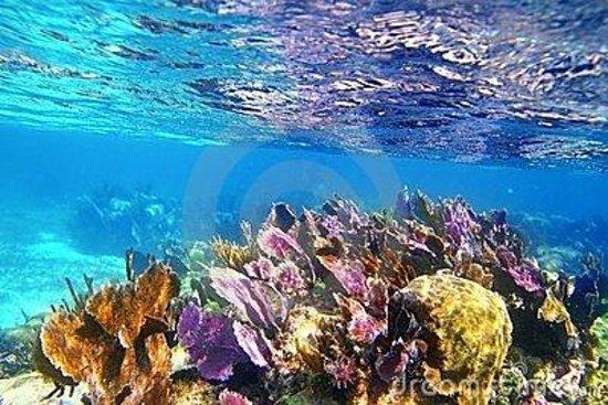 Mayan Coral Reef Yucatan Peninsula Mexico Address