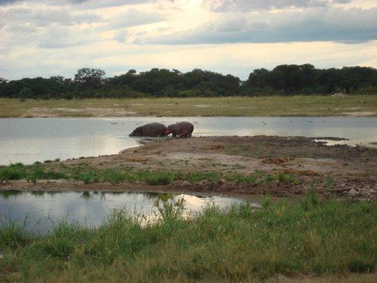 Nehimba Lodge: hippo