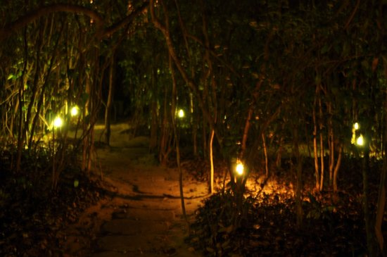 Hamanasi Adventure and Dive Resort: Lit trails to the treehouses