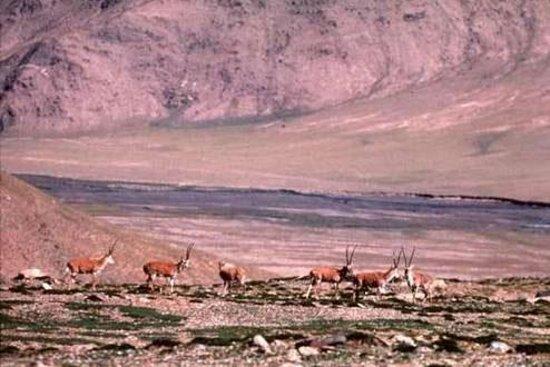 Dulan Hunting Ground Photo