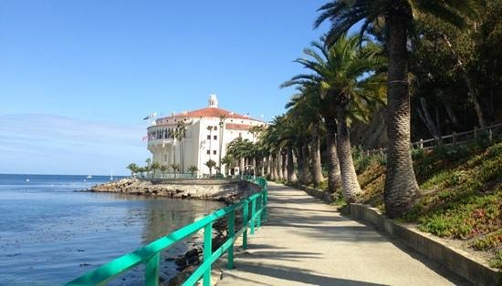 Catalina Island Chamber of Commerce & Visitors Bureau: palm tree lined walkways